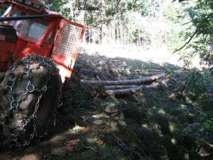 Rassemblement des arbres à l'aide du treuil.