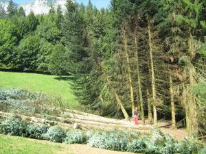 Abatage de tous les arbres ( coupe blanche )